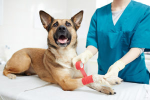 dog in petsaver pet first aid course